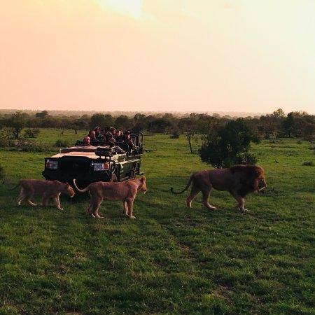 Ngala Private Game Reserve, Sudáfrica: photo8.jpg