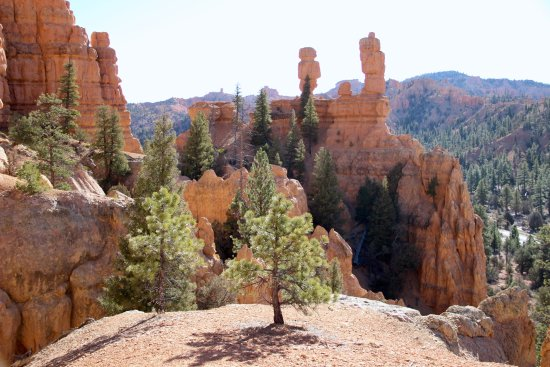 Panguitch, UT: Birdseye trail @ Red Canyon/Dixie National Forest