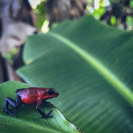 Boca Tapada, Costa Rica: photo1.jpg