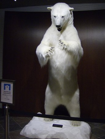 Explorer Hotel: Bear located in hotel lobby