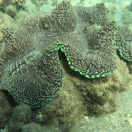 Great Keppel Island, Australia: photo6.jpg