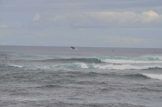 Mokuleia, HI: Humpback whales from November to May