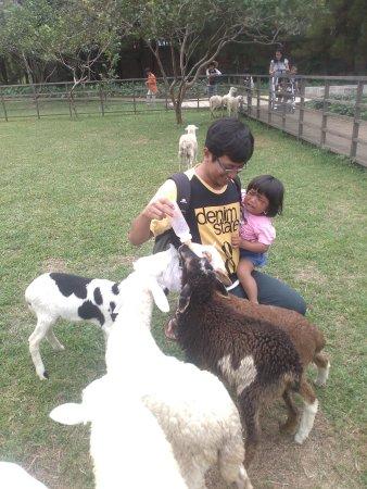 Kuntum Farmfield: Mimiin anak kambing
