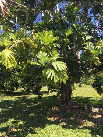 Diwan, Австралия: Fruit farm