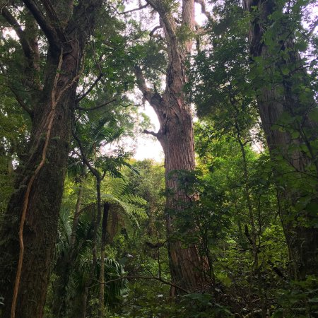 Happy Valley Adventures: Walking amongst giants!