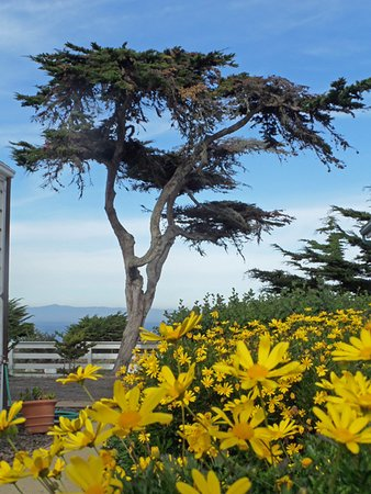 Point Pinos Lighthouse : landscape around the lighthouse