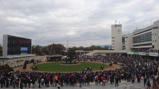 Kyoto Horse Racetrack : 京都競馬場 パドック