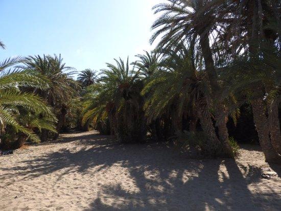 Vai, Greece: Пляж Ваи