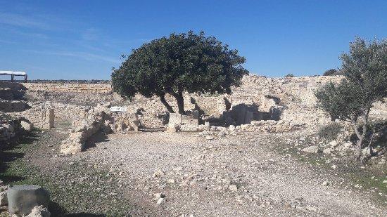 Episkopi, Cyprus: 20180108_124455_large.jpg