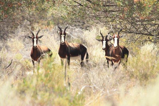 Eland's Bay, Sudáfrica: Park