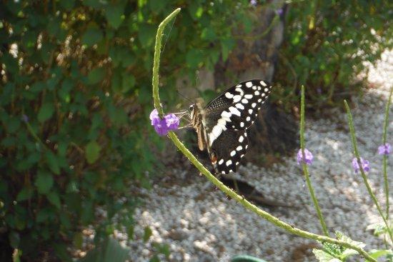Gunjur, Gambia: Birds & Butterflies everywhere :-)