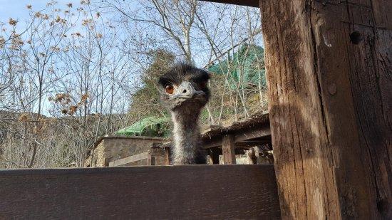 Berchules, Spanien: Emú