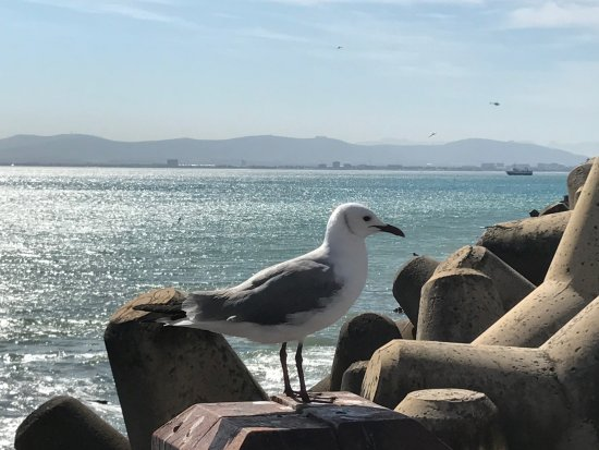 Radisson Blu Hotel Waterfront, Cape Town Photo
