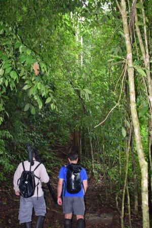 Corcovado National Park, Costa Rica: POR EL PARQUE NACIONAL CORCOVADO