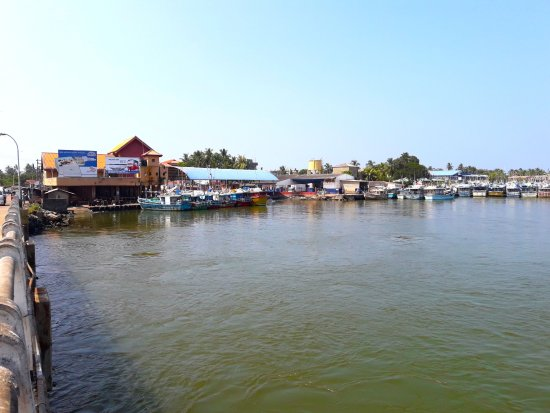 Nearby the negombo fish market pamunugamanico lagoon for Nico s fish market