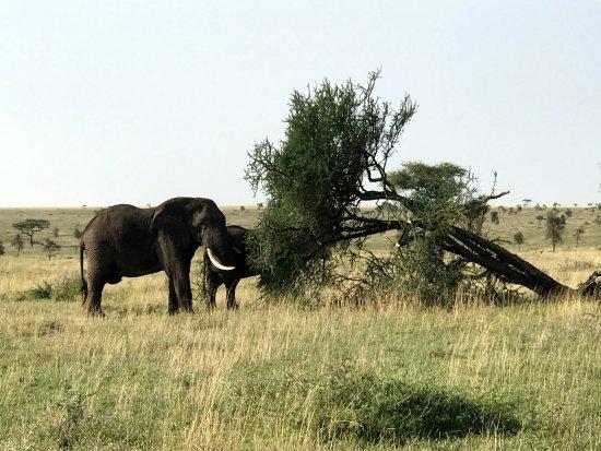 Zara Tours Safari Review