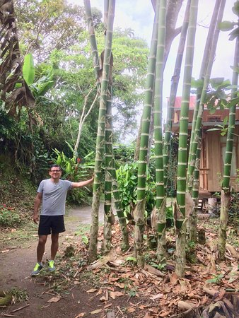 La Casa de Cecilia: Bamboo on the trail.