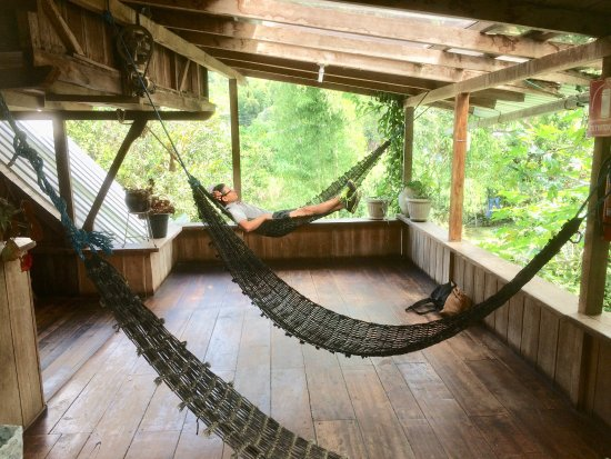 La Casa de Cecilia: The hammocks in the hostel/shared area.