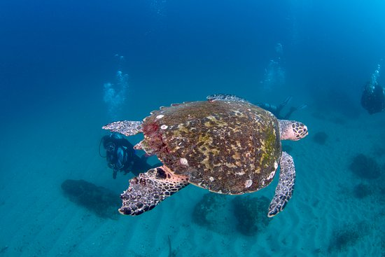 Bundall, Australia: Turtle swims past our divers at Cook Island Marine Park