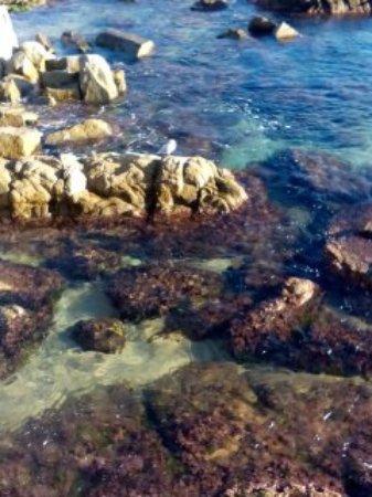 Playa de Fenals: у моря