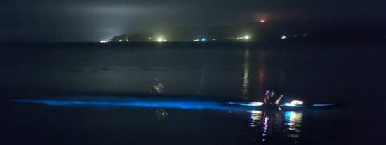 Marshall, Калифорния: Bioluminescence Tours Available: 4 Hour Tours & Camping Tours