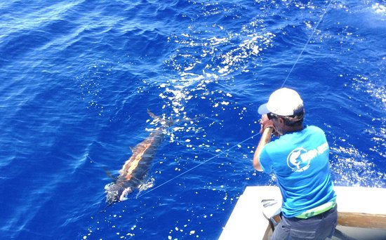 Bora bora sport fishing vaitape fransk polynesien for Bora bora fish
