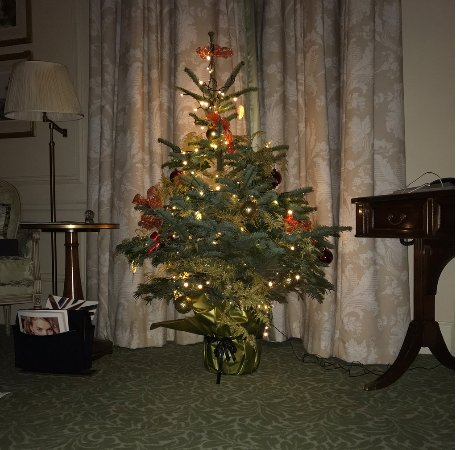 The Savoy: In-room Christmas Tree set up by hotel staff.