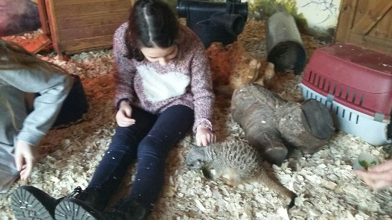 Stretham, UK: Fantastic time with the meerkats and the chameleon.  Well worth a visit.