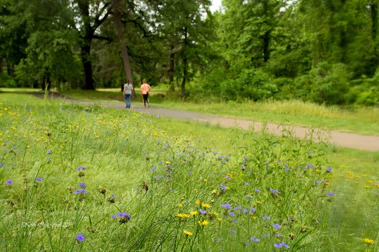 Texarkana, Арканзас: Wildflowers along the Nix Creek Trail