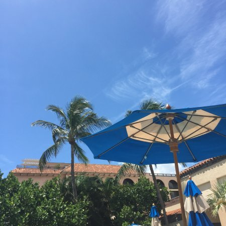 Delray Beach Marriott: pool area with hotel in background