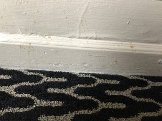 Kimpton Sir Francis Drake Hotel: Floor board splattered with something