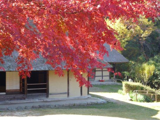 Open-Air Museum of Old Japanese Farm Houses: 南部の曲家:馬の産地として栄えた旧南部藩の農家。主屋に大きなうまやうをカギ型に接続したつくりから曲家と呼ばれます。
