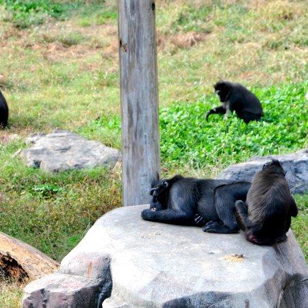 Memphis Zoo: photo8.jpg