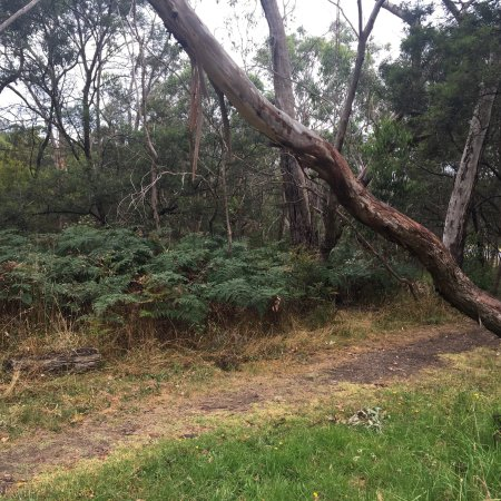 Moorooduc Quarry Flora And Fauna Reserve