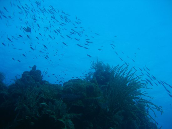Oasis Divers: Lots of fish