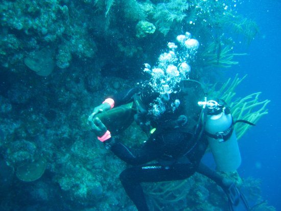 Oasis Divers: Dive master Greg cuddles a giant grouper