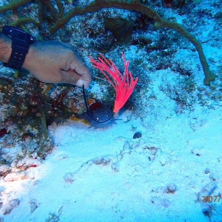 Palancar Reef: photo0.jpg