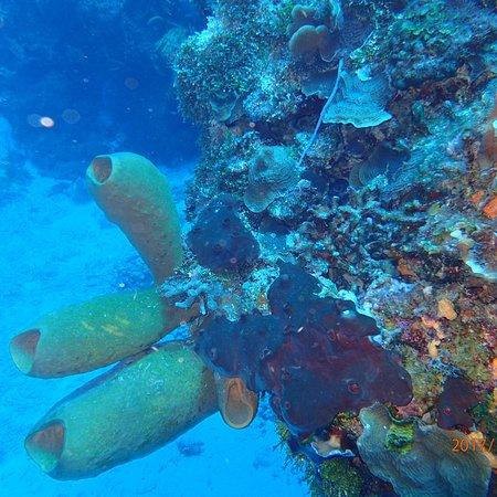 Palancar Reef: photo7.jpg