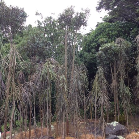 Otari-Wilton's Bush Native Botanic Garden: photo1.jpg