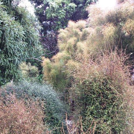 Otari-Wilton's Bush Native Botanic Garden: photo2.jpg