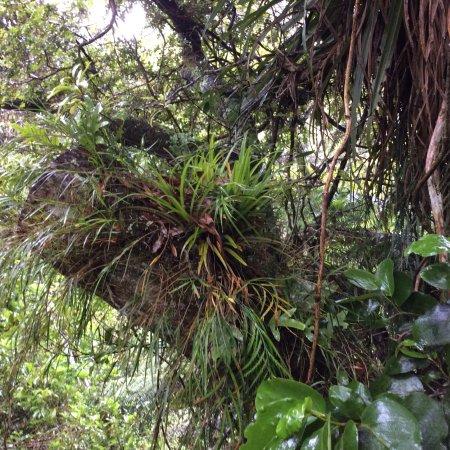 Otari-Wilton's Bush Native Botanic Garden: photo3.jpg