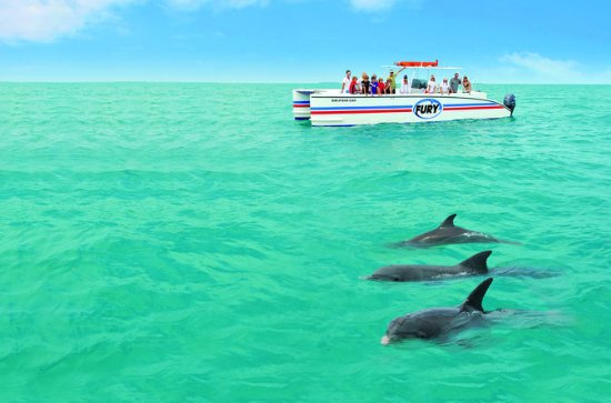 Key West Dolphin Watch and Snorkel ...