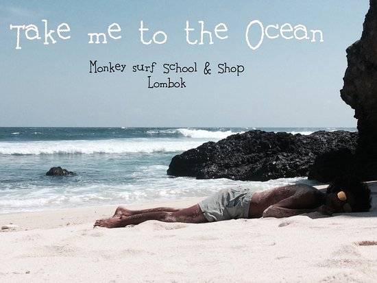 Monkey Surf Shop & School