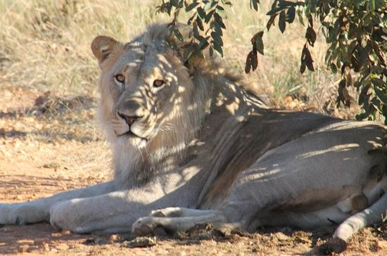 Parc national de Pilanesberg et...