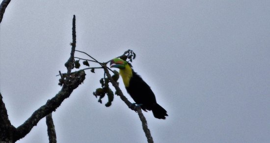 Monteverde Cloud Forest Reserve, Costa Rica: Amazingly enough a Toucan came when I was taking pictures of the pottery