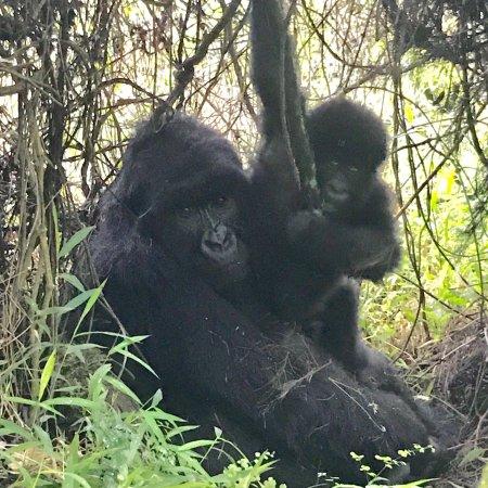 Mgahinga Gorilla National Park, Uganda: photo6.jpg