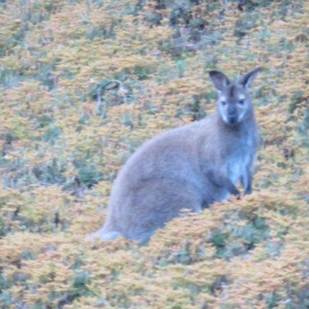 Legana, Australie : photo0.jpg