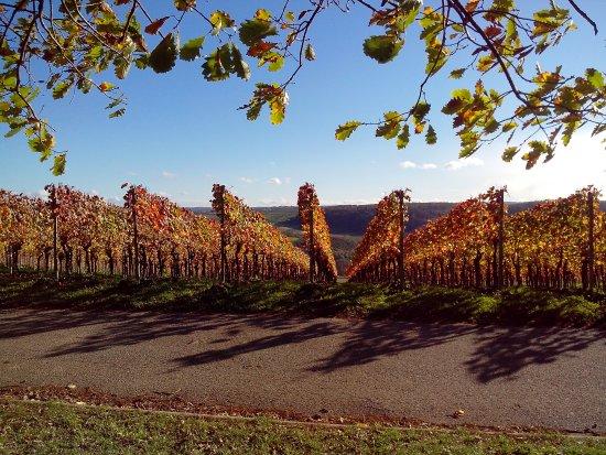 Wiernsheim, Tyskland: einheimische Weine