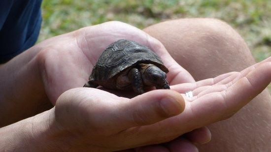 Villas Du Voyageur: Babyschildkröte gab es neber einer Riesenschildkröte auch