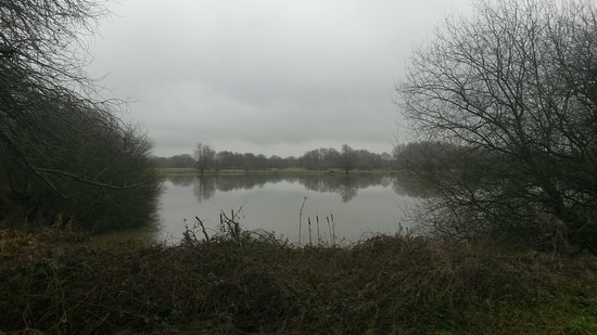 Linford Lakes Nature Reserve: 20180112_104821_large.jpg